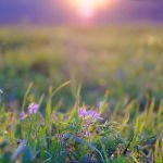 Field November ii by StargazerLZ