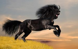 Black Horse-Lion by Dragonfly929