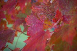 Leaves by HartBiit