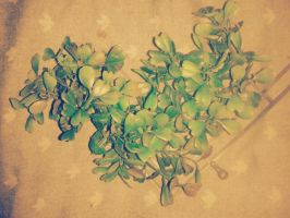 heart shaped leaves by chilindrini