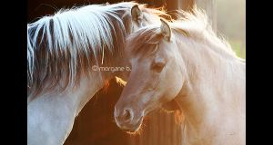 Chevaux de tarpan II by moem-photography