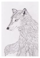 The Wolf by Kif3