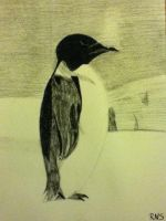 Charcoal Sketch: Penguin by RAYNBOWZNSTUFF
