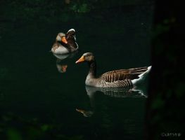 Gooses by Hopefully-not-human