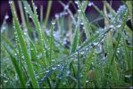 Heavy dew morning . by 999999999a