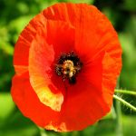 A Bee is There III by bojar