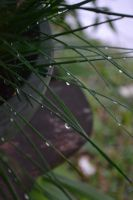 Droplets by LimKitSoon