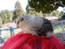 Little chickie. by Presona-photo