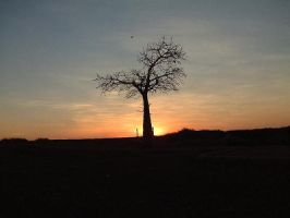 A sunset tree in Broome WA AU by StormGirl-Blue