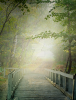 PREMIUM background - Bridge in the forest by Euselia