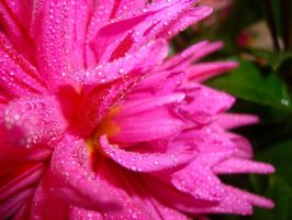 PinK by andr2eea