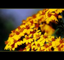 A Plethora Of Yellow by Vividlight
