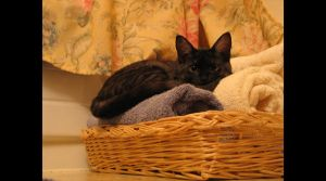 Towel Kitty by lilpixie