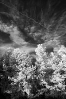 Infrared Forest And Sky by LDFranklin