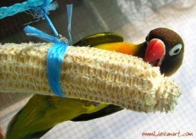 Corncobs, the safe free natural chew toys by emmil