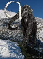 Woolly Mammoth by BondArt