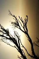 Dead Tree Sunset by Razamanaz