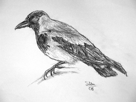 A crow by SobohP