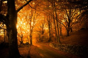 Golden Autumn Light in autumn forest by wildfox76