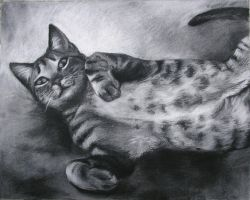 Commission Gray Tabby by Marbletoast