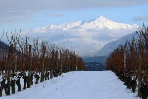Winter Vinyards by organicvision