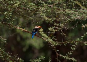 Kingfisher by CumbriaCam