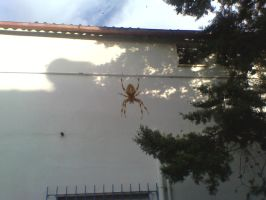 Spider by SatanicLover666