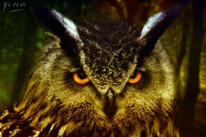 The Owl by queenphotoshop