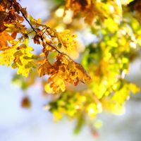 Autumn leaves by luka567