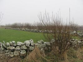 Stone wall on a misty morning by SheepSlave