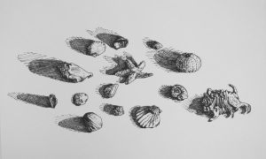 Seashells in Ink by shiftandcapslock