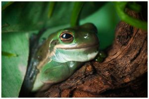 Frog Portrait by Zx30