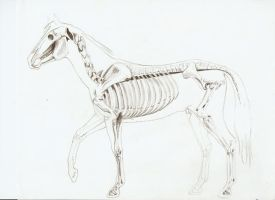 horse skeleton by DreyMidna