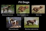 Fit Dogs by MNArtPhotography