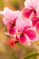 Orchids by AKayPhotography
