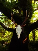 The Keeper of the woods by Estruda