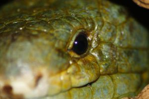 Reptile Smile by S-H-Photography