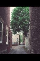 In the alley by Vibrantx