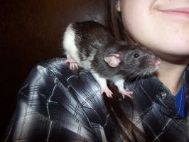 my rat and me by millie369