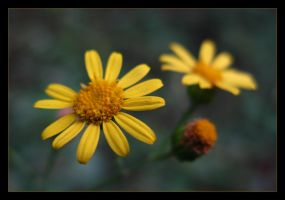 Yellow by photonFUEL