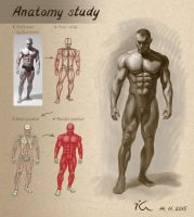 Anatomy study7 by Olekir