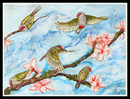 Red Browed Finch by SunStateGalleries