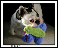 Quincy - My French Bulldog by KLR620