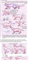 Kitty Tutorials 2- Bodies by Sky-Lily