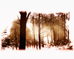 Red Forest by LadyLeaf48