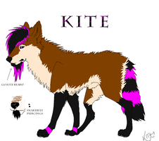 Kite Ref. Sheet by KiteKraschu