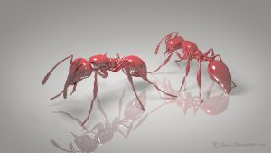 Fire Ants by Jcdow3Arts