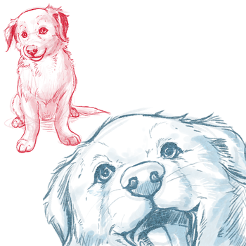 Border Collie Puppy Sketches by iMoiety
