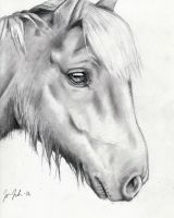 Horse by Godisinvincible