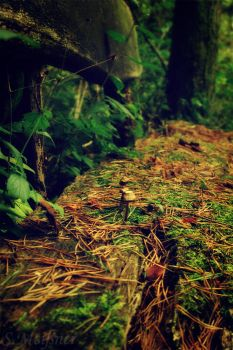 Take a seat little mushroom by Floridel
